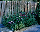 CHELSEA  2004: HORTUS CONCLUSUS GARDEN/ CHRISTOPHER BRADLEY-HOLE. PLANTING OF STIPA GIGANTEA  ROSA FERDINAND PICHARD  ROSA  TUSCANY SUPERB  KNAUTIA MACEDONICA WITH TIMBER SCREEN