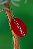 DESIGNER: CLARE MATTHEWS: RED PAINTED WOODEN LABEL WITH WHITE WRITING WHICH SAYS LAVENDULA
