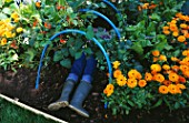 DESIGNER: CLARE MATTHEWS: VEGETABLE TUNNEL PROJECT - GIRL LYING INSIDE TUNNEL IN VEGETABLE GARDEN WITH CALENDULAS AND RUNNER BEANS