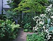 AMSTERDAM: PRIVATE GARDEN - PATH SURROUNDED BY FERNS  PHILADELPHUS AND ROBINIA