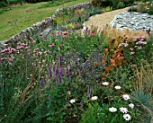 DESIGNER CLARE MATTHEWS - DEVON GARDEN - THE WALLED GARDEN WITH ECHINACEA PURPUREA  MONARDA BEAUTY OF COBHAM  ERYNGIUM BLAUKAPPE   AGASTACHE BLUE FORTUNE