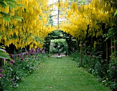 THE ABBEY HOUSE  WILTSHIRE: THE LABURNUM ARCH IN SPRING WITH ALLIUMS AND MOTHER AND CHILD SCULPTURE BY BOB ALLEN