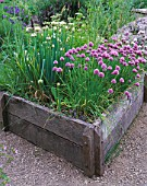 THE ABBEY HOUSE  WILTSHIRE: RAISED WOODEN BED IN THE HERB GARDEN WITH FLOWERING CHIVES