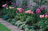 ST MICHAELS HOUSE  KENT: SPRING BORDER WITH TULIP BALLADE   TULIP NEW DESIGN   SWEET ALYSSUM AND STACHYS BYZANTINA