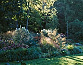 EARLY MORNING LIGHT STRIKES THE MAIN BORDER BY THE LAWN WITH ECHINACEAS  STIPA GIGANTEA AND PAMPAS GRASS. GREYSTONE COTTAGE  OXFORDSHIRE. DESIGNER: DUNCAN HEATHER