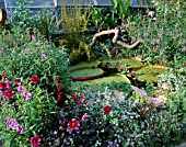 POND OUTSIDE WITH DAHLIAS AND THE GIANT WATERLILY VICTORIA LONGWOOD HYBRID. DESIGNER: TIM MYLES  COTSWOLD WILDLIFE PARK  OXFORDSHIRE