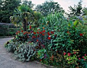 EXOTIC BORDER PLANTED WITH DAHLIAS AND A TRACHYCARPUS FORTUNEI. DESIGNER: TIM MYLES  COTSWOLD WILDLIFE PARK  OXFORDSHIRE