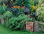 BORDER BY LAWN WITH RAISED BED  CROCOSMIA SEVERN SUNRISE  CAVALO DE NERO  ATRIPLEX HORTENSIS RUBRA. PARSONAGE  OMBERSLEY  WORCESTERSHIRE