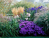 PETTIFERS GARDEN  OXON:AUTUMN BORDER WITH ACONITUM CARMICHAELII ARENDSII  CALAMAGROSTIS KARL FOERSTER  ASTER AMELLUS VIOLET QUEEN  ROSA SALLY HOLMES & KNIPHOFIA ROOPERI