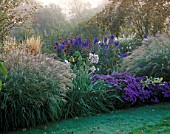 PETTIFERS GARDEN  OXFORDSHIRE: AUTUMN BORDER WITH MISCANTHUS YAKUSHIMA DWARF  ASTER VIOLET QUEEN  CALAMAGROSTIS KARL FOERSTER AND ACONITUM CARMICHAELII ARENDSII