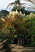 BORDER WITH CORTADERIA SELLOANA PUMILA  MISCANTHUS MALEPARTUS  RUDBECKIA LACINIATA AND SEED HEADS OF AGAPANTHUS JODIE. MARCHANTS HARDY PLANTS  SUSSEX