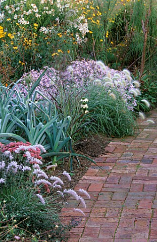 BRICK_PATH_AND_BORDER_PLANTED_WITH_PENNISETUM_ORIENTALE__PENNISETUM_VILLOSUM__LEEKS_AND_ASTER_PYRENA
