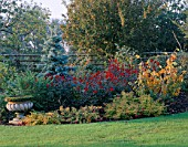 AUTUMN BORDER WITH ABIES CONCOLOR AND DAHLIAS BISHOP OF AUCKLAND & BISHOP OF LLANDAFF & HARDY FUSCHIAS. DESIGNER: JOHN MASSEY