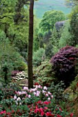 DUNGE VALLEY HIDDEN GARDENS  CHESHIRE: VIEW THROUGH RHODODENDRONS FROM THE TOP OF THE GARDEN TO THE COUNTRYSIDE BEYOND