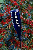 HIGHFIELD HOLLIES  HAMPSHIRE: BLUE GLASS BOTTLE ON A STICK USED AS A LABEL FOR ILEX J C VAN TOL