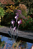 METAL ARUM LILLIES IN FORMAL POOL  DESIGNER: BRIAN CROSS  LAKEMOUNT IRELAND