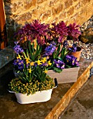 CONTAINERS ON STEP WITH NARCISSUS TETE-A-TETE  BLUE HYACINTHS  PANSIES AND ORNAMENTAL CABBAGES. DESIGNER: CLARE MATTHEWS