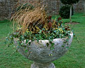 STONE URN PLANTED WITH EUPHORBIA AMYGDALOIDES PURPUREA  IVY  SKIMMIA  CAREX AND PRIMROSES. MARCH: DESIGNER: JOHN MASSEY