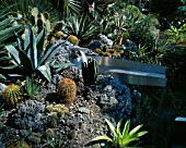 CACTUS AND SUCULENTS PATCH INCLUDING: ECHINOPSIS  AGAVE AMERICANA  OPUNTIA RHODANTHA  WITH CONTRASTING STAINLESS STEEL WATER SHOOT   DESIGNER: PAUL SPRACKLIN  OASIS DESIGNS