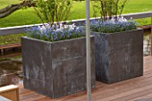 TWO METAL CONTAINERS ON TERRACE IN SPRING PLANTED WITH BLUE FORGET-ME-NOTS. KEUKENHOF GARDENS  HOLLAND
