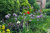 HERBACEOUS BORDER WITH LYSIMACHIA FIRECRACKER  ALLIUM ROSENBACHIANUM  ALLIUM AFLATUNENSE AND PAPAVER ORIENTALE. JANET CROPLEY GARDEN  HILL GROUNDS  NORTHAMPTONSHIRE.