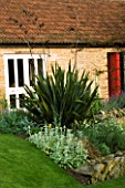 PHORMIUM TENAX AND STACHYS IN THE BACK GARDEN OF WINGWELL NURSERY   RUTLAND