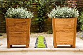 TWO SQUARE WOODEN CONTAINERS PLANTED WITH CONVOLVULUS CNEORUM SIT ON EITHER SIDE OF PLANTED RILL WITH MIND YOUR OWN BUSINESS-SOLEIROLIA SOLEIROLII.  DESIGNER: CHARLOTTE ROWE