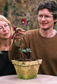 WOODCHIPPINGS  NORTHANTS: RICHARD BASHFORD AND VAL BEXLEY ADMIRE ONE OF THEIR CHOICE HELLEBORES