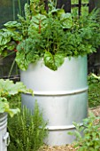 RE-CYCLED CONTAINER. OIL DRUM PLANTED WITH RUBY CHARD  ONIONS AND CARROTS. DESIGNERS: CLAIRE WARNOCK AND RACHEL WATTS