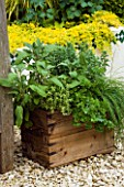 DESIGNER: CLARE MATTHEWS: OLD WOODEN WINE BOX HERB CONTAINER WITH CHIVES  PARSLEY  SAGE AND OREGANO