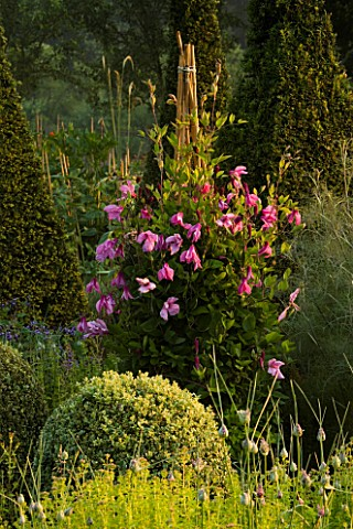 GREEN_GLAZED_CONTAINER_PLANTED_WITH_CLEMATIS_ALIONUSHKA_IN_THE_PARTERRE_AT_PETTIFERS__OXFORDSHIRE