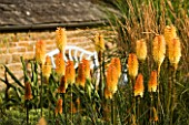PETTIFERS GARDEN  OXFORDSHIRE: PLANT COMBINATION - CALAMAGROSTIS X ACUTIFLORA KARL FOERSTER AND KNIPHOFIA TAWNY KING
