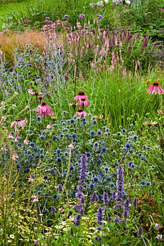 DESIGNER_CLARE_MATTHEWS__DEVON_GARDEN__THE_WALLED_GARDEN_WITH_ECHINACEA_PURPUREA__ERYNGIUM_BLAUKAPPE