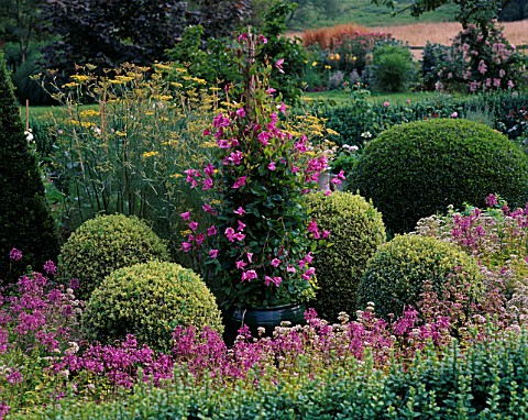 PETTIFERS__OXFORDSHIRE_GREEN_GLAZED_CONTAINER_IN_THE_PARTERRE_PLANTED_WITH_CLEMATIS_ALIONUSHKA
