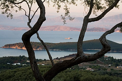 GINA_PRICES_GARDEN__CORFU_VIEW_FROM_THE_HOUSE_THROUGH_AN_OLIVE_TREE_TO_THE_IONIAN_SEA_AND_ALBANIAN_M