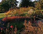 CLARE MATTHEWS GARDEN  DEVON: DAWN LIGHT ON THE WALLED GARDEN WITH ECHINACEA PURPUREA  PEROVSKIA BLUE SPIRE  STIPA ARUNDINACEA AND ANEMONES