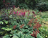 MAYROYD MILL HOUSE  YORKSHIRE: DESIGNERS: RICHARD EASTON AND STEVE MACKAY - WOODLAND SHADE PLANTING WITH RODGERSIA  ANGELICA GIGAS  ASTILBE CHINENSIS VAR TACQUETI PURPURLANZE