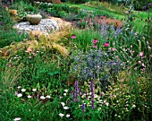 DEVON GARDEN  CLARE MATTHEWS: NEW PERENNIAL PLANTING IN THE GRAVEL GARDEN WITH ECHINACEAS  STIPA TENUISSIMA  PEROVSKIA  ERYNGIUMS AND AGASTACHE