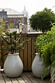 URBAN ROOF:CONTAINERS BY URBIS PLANTED BY FERESCA LIMITED -  ASPARAGUS DENSIFLORUS  CRYPTOMERIA GLOBOSA NANA