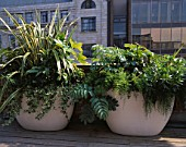URBAN ROOF: CONTAINERS BY URBIS PLANTED BY FERESCA LIMITED -  PHORMIUM VARIEGATUM  FATSIA JAPONICA SKIMMIA KEW GREEN  MELIANTHUS MAJOR  HEDERA HELIX  ASPARAGUS DENSIFLORUS