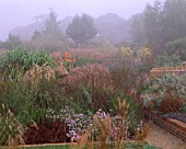 MISTY MORNING AT MARCHANTS HARDY PLANTS  SUSSEX - BIG BORDER WITH MISCANTHUS VARIETIES  CANNA INDICA PURPUREA