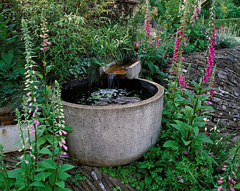 WINGWELL_NURSERY__RUTLAND_WATER_FEATURE_TROUGH_SURROUNDED_BY_FOXGLOVES