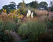 AUTUMN BORDER OF MIXED GRASSES AND PERENNIALS BESIDE BRICK PATH  AT MARCHANTS HARDY PLANTS  SUSSEX - CORTADERIA SELLOANA AUREOLINEATA  HELIANTHUS SALICIFOLIUS  MISCANTHUS