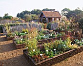 VIEW ACROSS NURSERY BEDS AT MARCHANTS HARDY PLANTS  SUSSEX