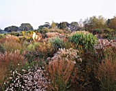 VIEW ACROSS OCTOBER BORDERS OF MIXED GRASSES AND PERENNIALS TOWARDS HOUSE AT MARCHANTS HARDY PLANTS  SUSSEX