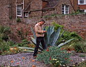 PAN GLOBAL PLANTS  GLOUCESTERSHIRE: NICK MACER STANDS BESIDE A MASSIVE AGAVE AMERICANA IN THE WALLED GARDEN