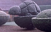 PARSONAGE  WORCESTERSHIRE: FROSTED TOPIARY TORTOISE BESIDE THE LAWN. WINTER