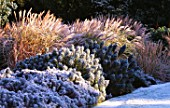 GARDEN DESIGNED BY DUNCAN HEATHER: FROSTY BORDER WITH EUPHORBIAS AND GRASSES