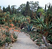 VIEW ALONG PATH WITH ALOES AND CACTUS. LA MORTOLA GARDEN  ITALY
