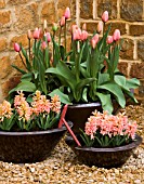 RICKYARD BARN  NORTHAMPTONSHIRE: COPPER CONTAINERS IN GRAVEL COURTYARD PLANTED WITH HYACINTH GIPSY QUEEN AND TULIP APRICOT IMPRESSION